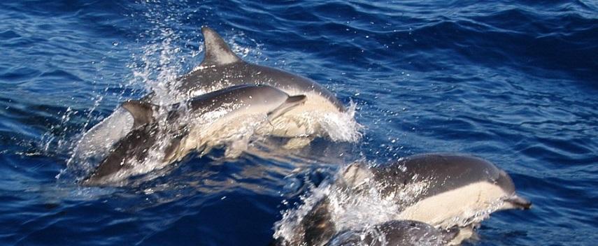 joy-dolphins